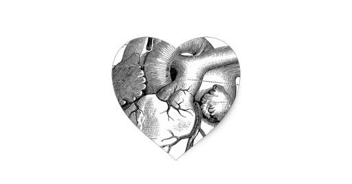 vintage_heart_anatomy_customizable_heart_sticker-r90f31c0d03904a44bd3c85ad56d9836c_v9w0n_8byvr_630